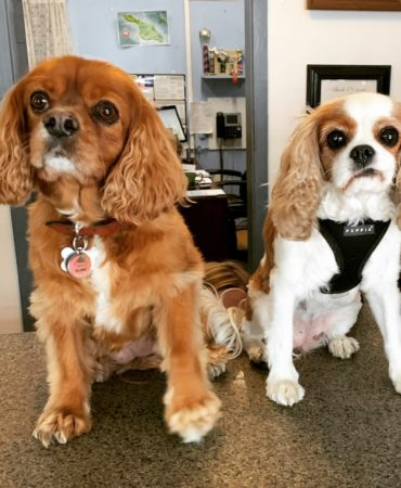 Hermosa Hotel Dog Employees