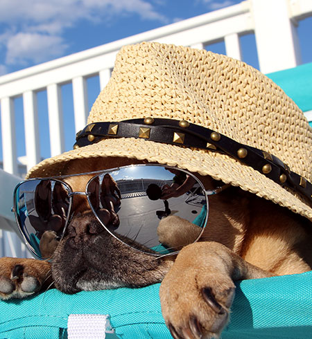 Hotel-Pup-Beach